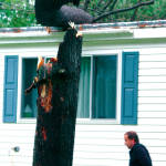 CHECKING THE DAMAGE — Clint Libby of Bridgton checks a tall pine tree that snapped and a portion landed on his home's roof Sunday afternoon. (Rivet Photo)