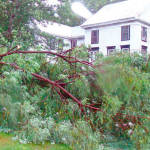 THE IRE OF IRENE — It appeared that Tropical Storm Irene spawned a microburst that set down along lower Highland Lake on Sunday, traveling along Creamery Street behind the old hospital building and crossing over Main Hill, taking down huge trees on Fowler Street, Cottage Street and Church Street as it blew through Bridgton Village. (Ackley Photo)